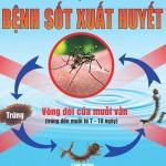 Bán Thuốc Diệt Muỗi Tại Nhà